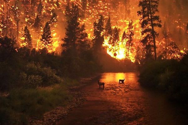ILICA-Instituto-Longoria-de-Investigacion-Cientifica-Aplicada-Desastres-Naturales-Incendios-Forestales_v001