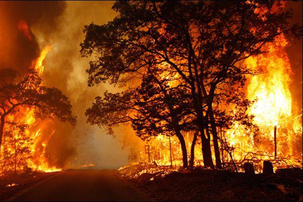ILICA-Instituto-Longoria-de-Investigacion-Cientifica-Aplicada-Desastres-Naturales-Incendios-Forestales_v002
